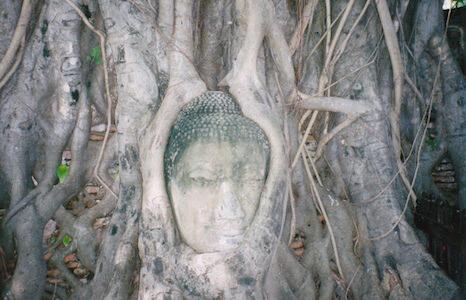 木に埋まってる仏頭