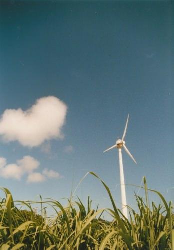 さとうきび畑に囲まれて立つ、風力発電