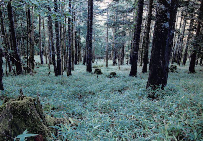 大台ケ原の原生林
