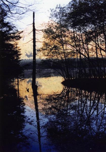 大正池からの散策路