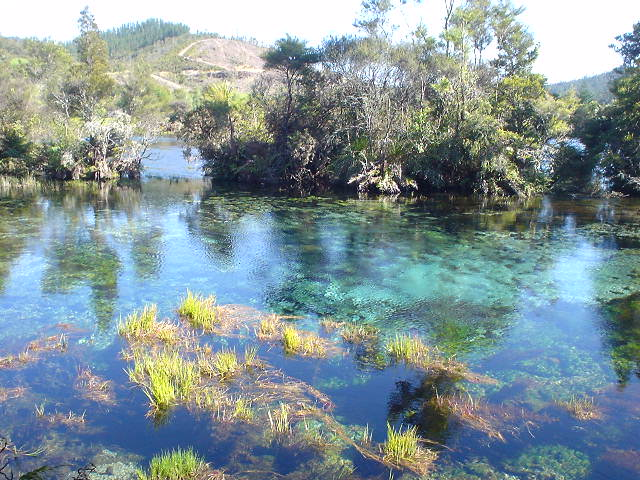ププ・スプリング - ニュージーランド