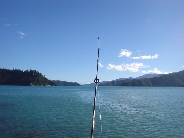 ピクトンで海釣り
