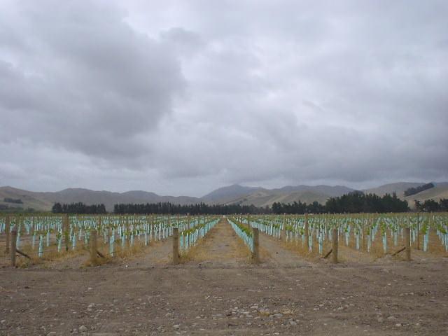 ワイナリー畑での日雇い労働 - ブレナム