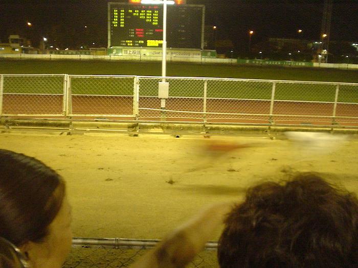残像しか映らないほど速いドッグレース