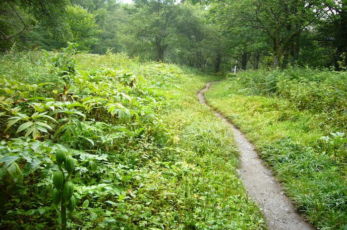 梓川に沿って緩やかな傾斜の林道