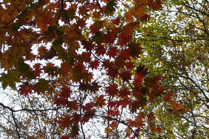 下山中に紅葉がいっぱい