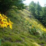 斜面は花畑