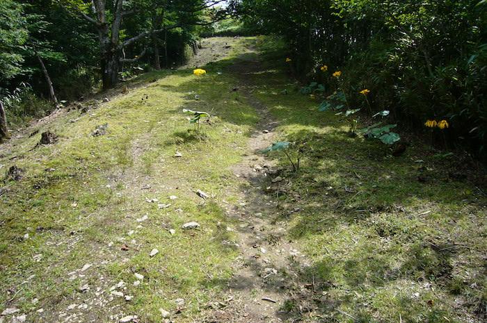 鷹ノ巣山への登り道