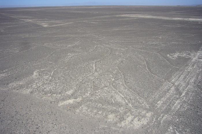 木 - ナスカの地上絵
