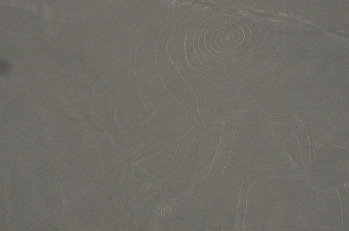 猿 - ナスカの地上絵