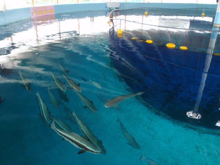 魚の養殖所
