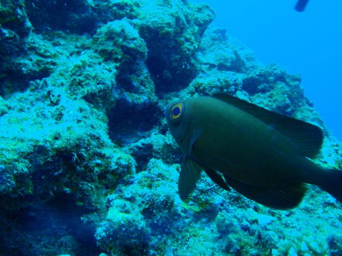 デカイ目の魚