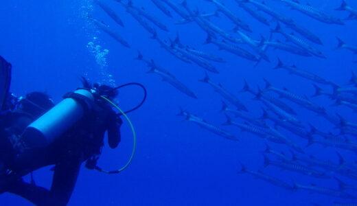 バラクーダの群れ - ブルーコーナー - パラオダイビング