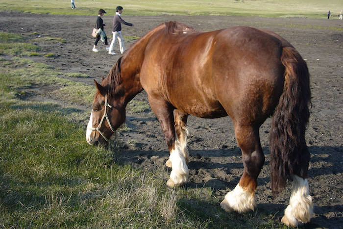 草千里ヶ浜の牛馬