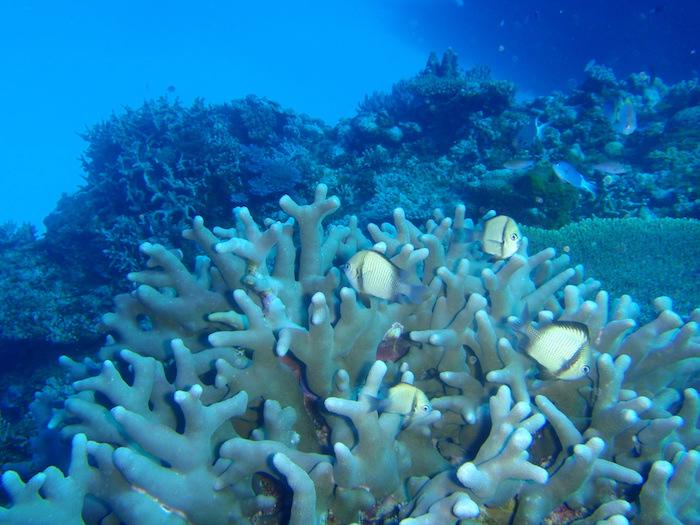 サンゴと熱帯魚@波照間島ダイビング