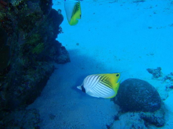 熱帯魚@波照間島ダイビング