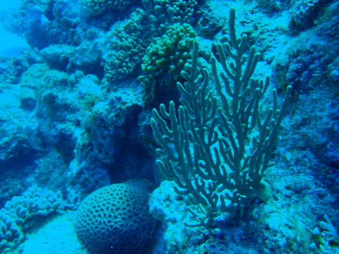 サンゴ@波照間島ダイビング