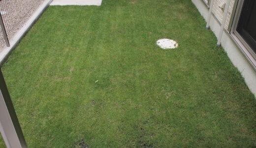冬も夏も1年通して緑の芝生。バロネス社ブレンドの芝生の種。