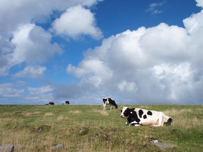 美ヶ原高原の牧場