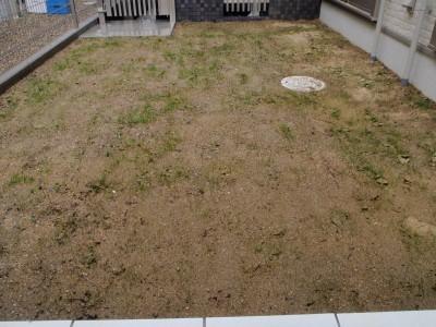芝生の種蒔きからの経過と追い撒き