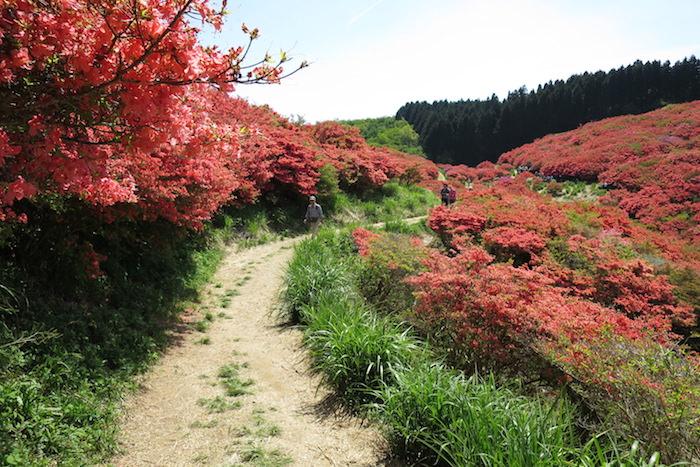 大和葛城山ツツジ園に向かって歩く