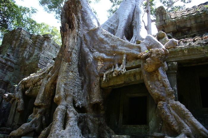 スポアンの木 - プリア・カン