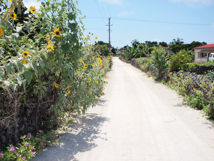 白い砂の道