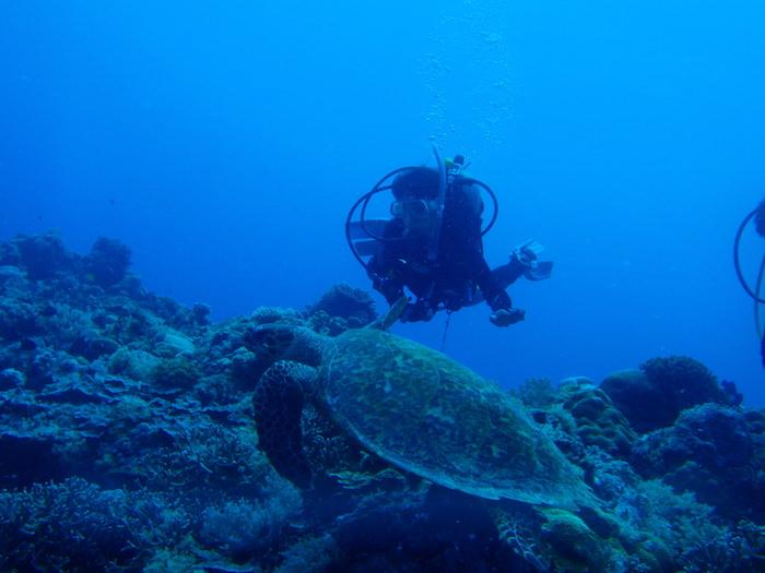 目の前にウミガメ - シアスコーナー - パラオダイビング