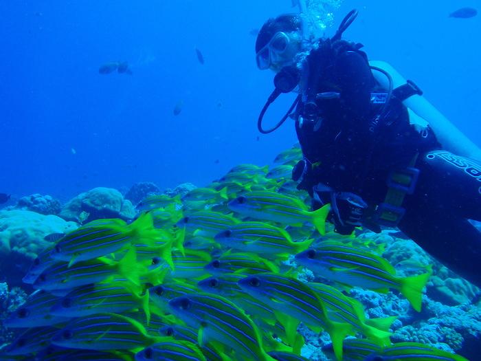 黄色い魚 - ニュードロップオフ - パラオダイビング