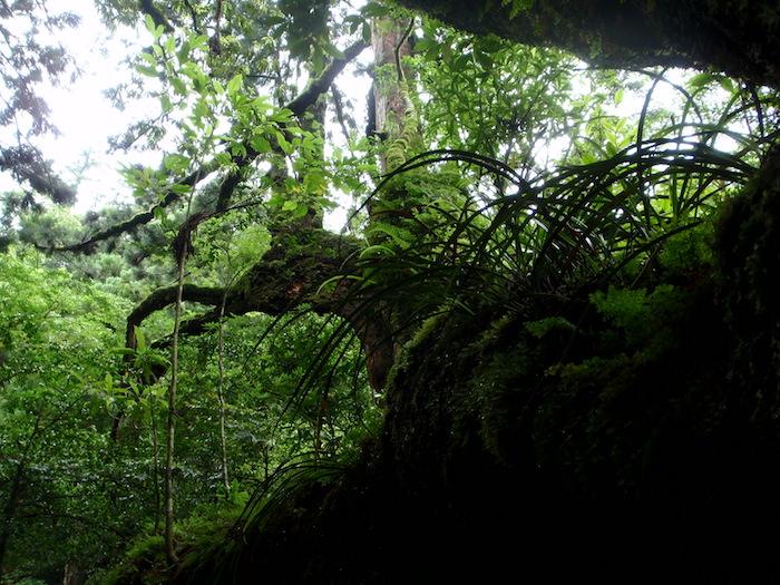 原始の森 - 白谷雲水峡トレッキング