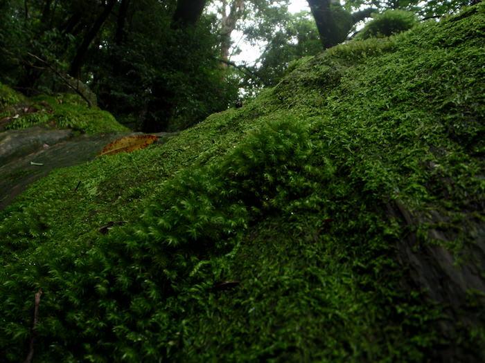 苔の世界 - 白谷雲水峡トレッキング