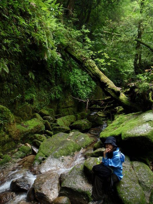 苔の森に川 - 白谷雲水峡トレッキング