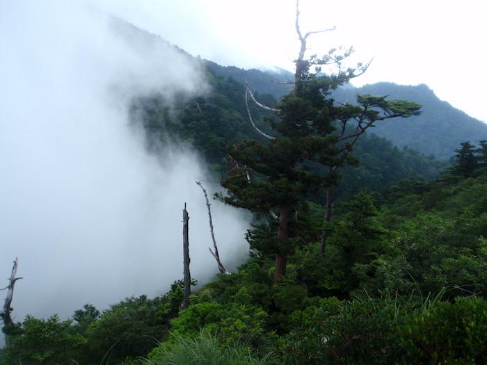 太鼓岩を目指す - 白谷雲水峡トレッキング