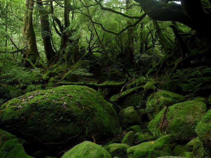 もののけ姫の森 - 白谷雲水峡トレッキング
