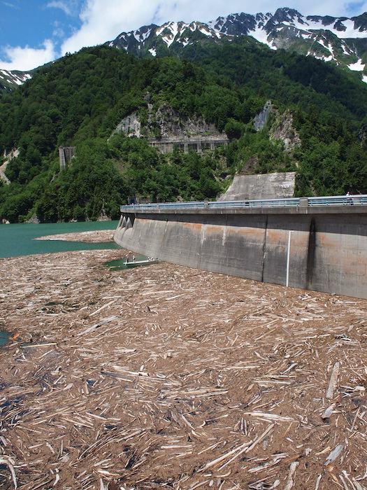 黒部ダムに流れ着く流木