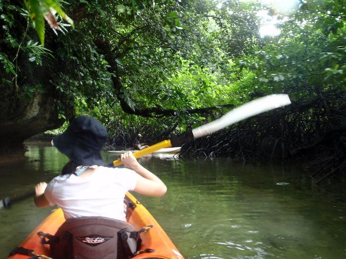 マングローブの森 - パラオ シーカヤック探検ツアー