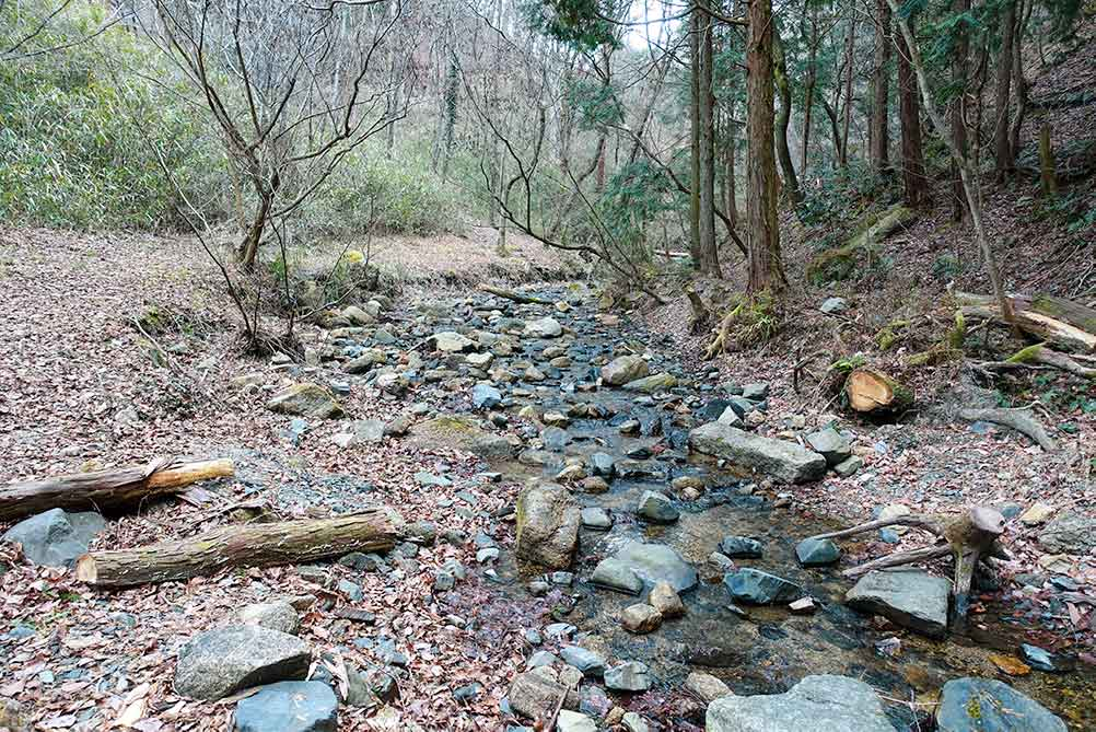 山城町森林公園の川